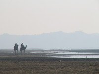 041227092414_camels_by_chambal_river