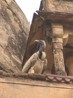 050103113344_vulture_on_jahangir_mahal