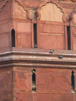 041130014304_pigeon_and_parakeets_living_in_red_fort