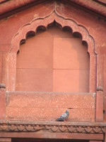 041130014940_pigeon_above_the_gate_in_red_fort