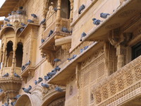 041211005544_pigeons_on_jaisalmer_palace