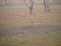 041223164254_night_egret_at_ranthambhore