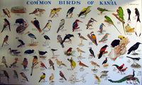 041229080238_common_birds_of_kanha