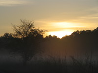 041203173936_corbett_jungle_sunrise