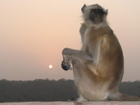 041222170836_sad_monkey_at_rathamhbore