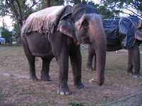 041202040224_elephants_in_dhikala