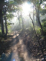 041202184210_jungle_road_at_the_morning