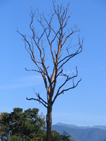 041202200844_tree_and_blue_sky