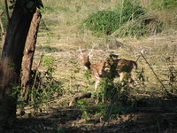 041203012124_spotting_spotted_deer