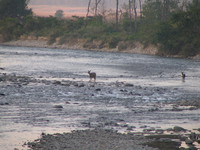 041203032450_two_female_sambar_deer_bathing