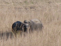 041203202142_two_wil_elephants