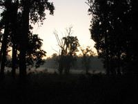 041229070438_morning_at_kanha_national_park