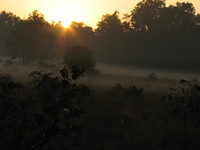 041229070600_misty_morning_at_kanha_national_park