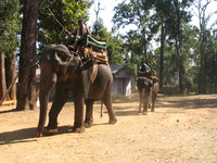 041229111110_two_elephants
