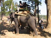041229111704_elephants_and_kids