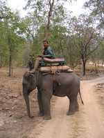 050101081728_elephant_rider_looking_for_tiger