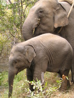 050101095136_father_and_baby_elephant