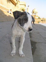 041215031210_puppy_at_gadi_sagar