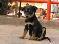 050103155328_nice_puppy_at_orcha