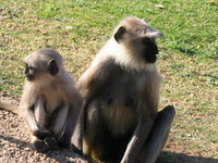 041219154456_mother_and_baby_monkey