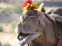 041208020442_camel_and_red_flower