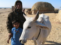 041211205146_father_and_son_and_cow