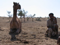 041213220618_camel_and_seller
