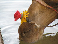 041208020308_camel_and_flower