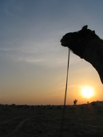041208034458_camel_and_sunset