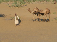 041212191056_osman_and_the_three_camels