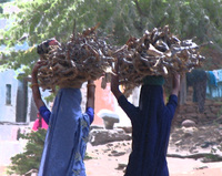 041221144038_two_firewood_girls_in_bundi