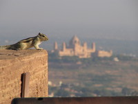 041216023314_squirrel_and_umaid_bhawan_palace