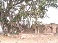 050103140532_ancient_tree_near_tope_khana