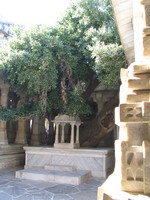 041217003736_old_oak_tree_in_jain_temple