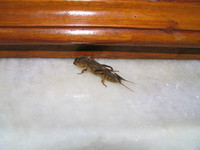 050103220736_nasty_insect_in_ganpati_guesthouse