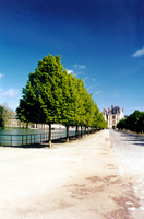 011_france_fontainebleau_trees