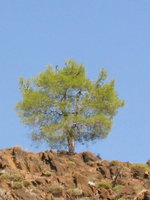 023_the_lonely_tree_s