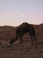 007_moonrise_over_camel