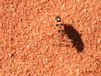 023_bugs_in_the_desert