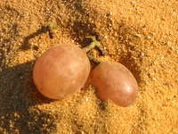 024_bahariyya_grapes_in_the_desert