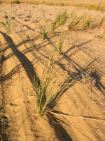 008_plants_at_the_desert
