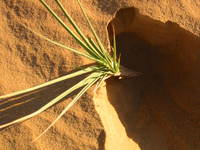 010_seeking_the_root_of_desert_plant