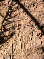 022_tree_root_stuff