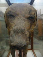 084_dog_mummy