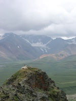 07210041_dall_sheep_resting