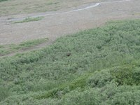 07210035_little_moose