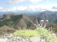 07220010_flower_and_mountains