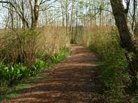 04270109_path_in_burnaby_lake_park