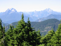 1161607_trees_and_moutains