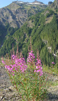 020824_flower_and_mountain